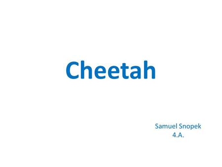 Cheetah Samuel Snopek 4.A.. About cheetah Cheetah is very slim cat. It has got small circle head, long legs and tail. Its hair is yellow with small black.