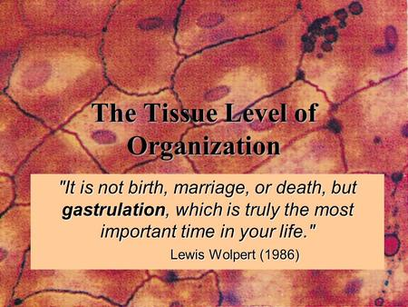 The Tissue Level of Organization It is not birth, marriage, or death, but gastrulation, which is truly the most important time in your life. Lewis Wolpert.