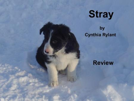 Stray by Cynthia Rylant