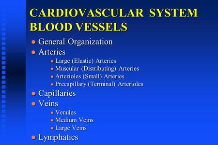 CARDIOVASCULAR SYSTEM BLOOD VESSELS General Organization General Organization Arteries Arteries Large (Elastic) Arteries Large (Elastic) Arteries Muscular.