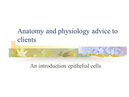 Anatomy and physiology advice to clients An introduction epithelial cells.