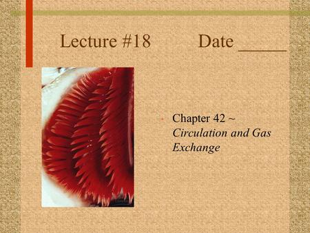 Lecture #18 Date _____ Chapter 42 ~ Circulation and Gas Exchange.