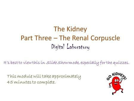 The Kidney Part Three – The Renal Corpuscle Digital Laboratory It's best to view this in Slide Show mode, especially for the quizzes. This module will.