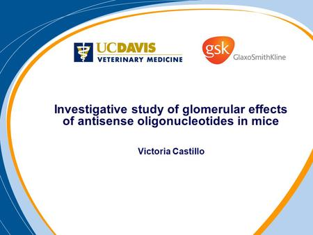 Investigative study of glomerular effects of antisense oligonucleotides in mice Victoria Castillo.