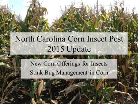 North Carolina Corn Insect Pest 2015 Update New Corn Offerings for Insects Stink Bug Management in Corn.