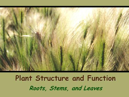 Plant Structure and Function Roots, Stems, and Leaves.