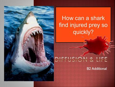 How can a shark find injured prey so quickly?