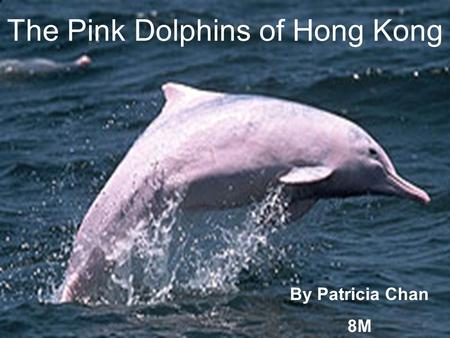 The Pink Dolphins of Hong Kong By Patricia Chan 8M.