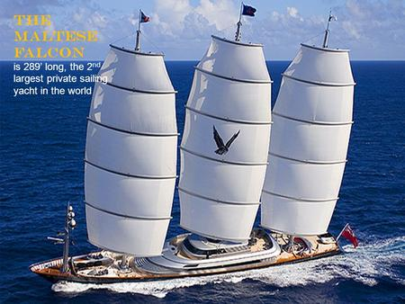 The Maltese Falcon is 289' long, the 2 nd largest private sailing yacht in the world.