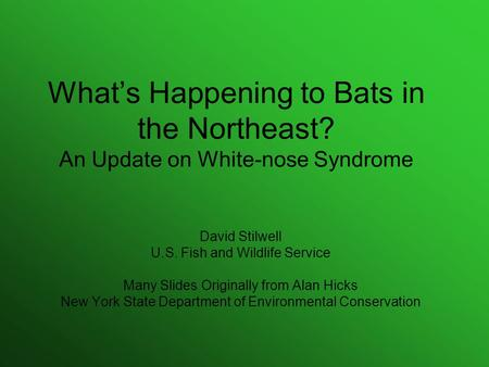 What's Happening to Bats in the Northeast? An Update on White-nose Syndrome David Stilwell U.S. Fish and Wildlife Service Many Slides Originally from Alan.