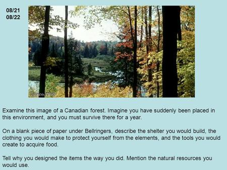 Examine this image of a Canadian forest. Imagine you have suddenly been placed in this environment, and you must survive there for a year. On a blank piece.