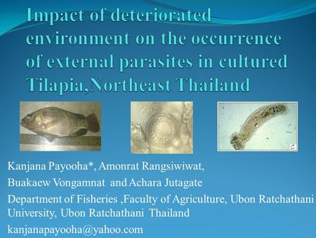 Kanjana Payooha*, Amonrat Rangsiwiwat, Buakaew Vongamnat and Achara Jutagate Department of Fisheries,Faculty of Agriculture, Ubon Ratchathani University,