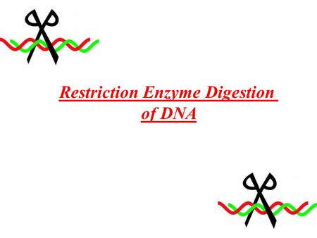 Restriction Enzyme Digestion of DNA. Experiment Goals Digestion of DNA by restriction enzyme Analyze digested DNA by electrophoresis.