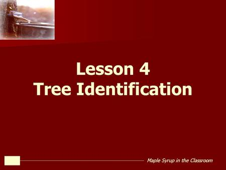 Maple Syrup in the Classroom Lesson 4 Tree Identification.