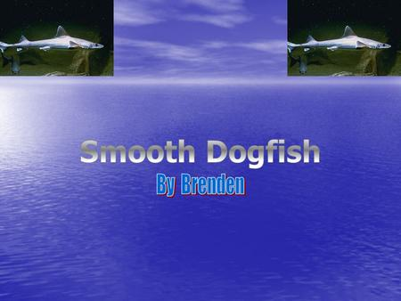 Smooth Dogfish By Brenden.