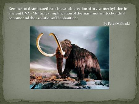 By Peter Malinski. Mammoths are an extinct species that lived during the Pleistocene as recently as 10,000 years ago. Some mammoths have been recovered.