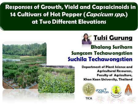 Responses of Growth, Yield and Capsaicinoids in 14 Cultivars of Hot Pepper (Capcicum spp.) at Two Different Elevations Bhalang Suriharn Sungcom Techawongstien.