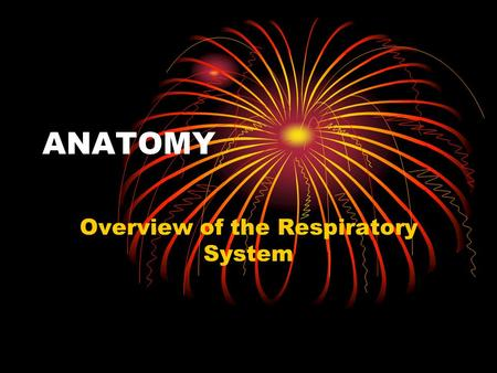 Overview of the Respiratory System