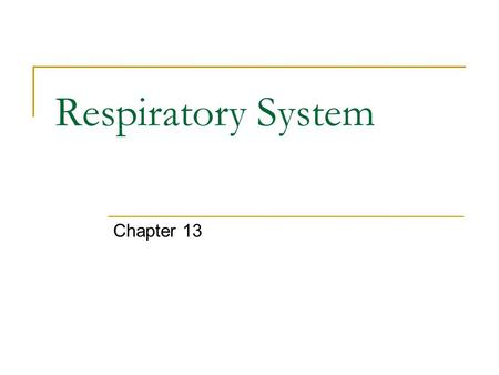 Respiratory System Chapter 13.