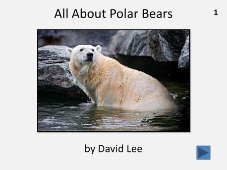All About Polar Bears 1 by David Lee. What Polar Bears Look Like……………………….………pg. 3 How Polar Bears Live in the Cold……….………………pg. 7 Are Polar Bears in.