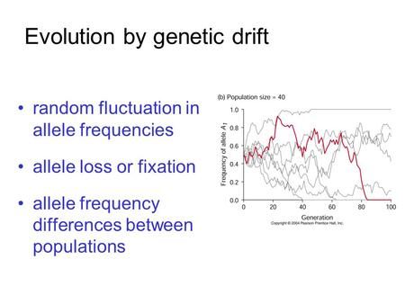Evolution by genetic drift random fluctuation in allele frequencies allele loss or fixation allele frequency differences between populations.