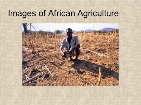 Images of African Agriculture. Its affects And failures.