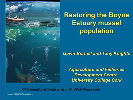 Restoring the Boyne Estuary mussel population Gavin Burnell and Tony Knights Aquaculture and Fisheries Development Centre, University College Cork Image: