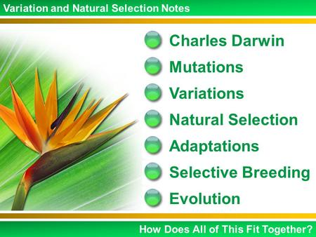 Charles Darwin Mutations Variations Natural Selection Adaptations