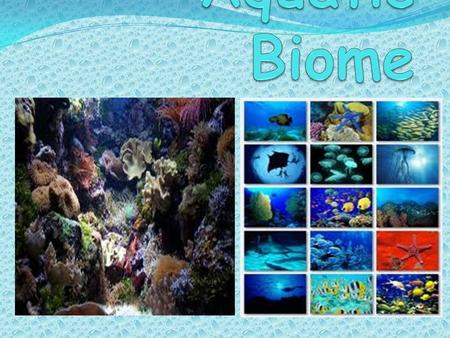 Biome The climate is warm and cold in certain areas of the ocean. The location is in the water habitats. The habitats are rocks, sand, plants, reefs,