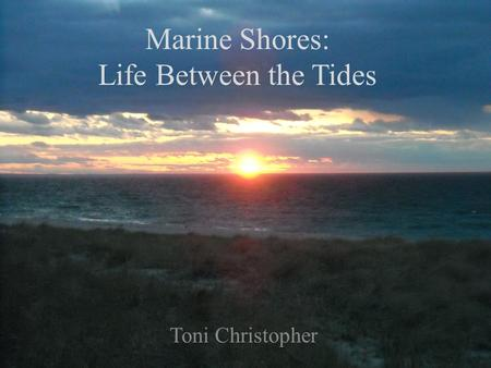 Marine Shores: Life Between the Tides Toni Christopher.