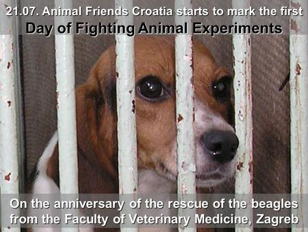 On the anniversary of the rescue of the beagles from the Faculty of Veterinary Medicine, Zagreb 21.07. Animal Friends Croatia starts to mark the first.