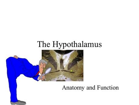 The Hypothalamus Anatomy and Function.