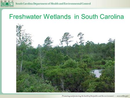 Freshwater Wetlands in South Carolina. Wetlands Wetlands are delineated by the Corps based on the 1987 Wetland Delineation Manual. Soils, evidence of.