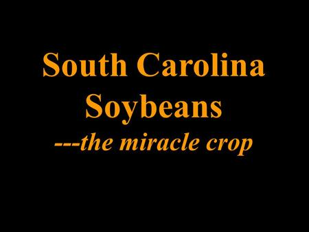 South Carolina Soybeans ---the miracle crop. Mature Soybean.