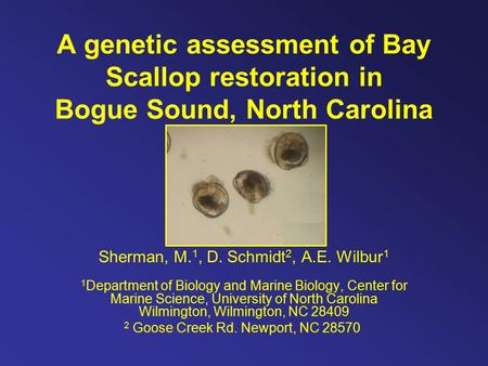 A genetic assessment of Bay Scallop restoration in Bogue Sound, North Carolina Sherman, M. 1, D. Schmidt 2, A.E. Wilbur 1 1 Department of Biology and Marine.
