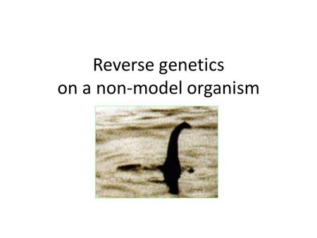Reverse genetics on a non-model organism. Reverse genetics Gene in hand. What's its function?