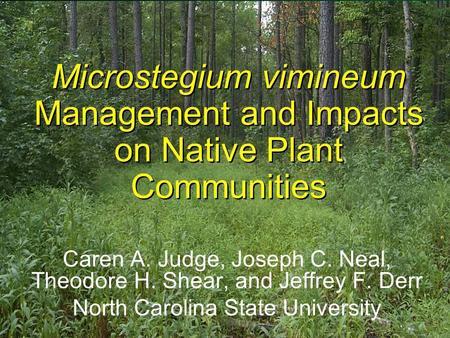 Microstegium vimineum Management and Impacts on Native Plant Communities Caren A. Judge, Joseph C. Neal, Theodore H. Shear, and Jeffrey F. Derr North Carolina.