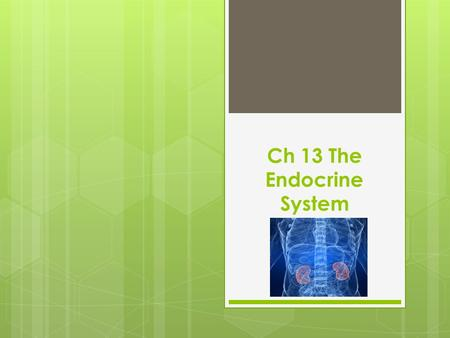 Ch 13 The Endocrine System. Terms  Adrenal glands (2)- adren/o- Regulates electrolyte levels, infuences metabolism, and responds to stress.  Gonads-