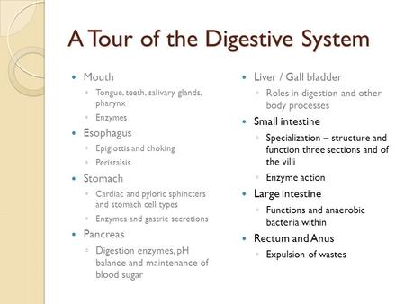 A Tour of the Digestive System Mouth ◦ Tongue, teeth, salivary glands, pharynx ◦ Enzymes Esophagus ◦ Epiglottis and choking ◦ Peristalsis Stomach ◦ Cardiac.