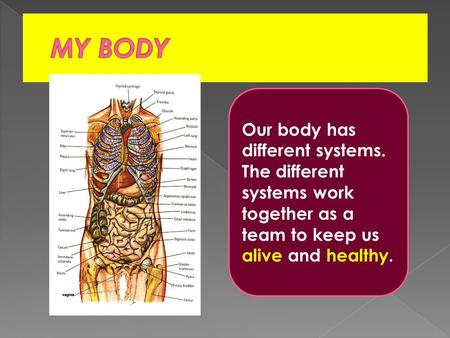 Our body has different systems. The different systems work together as a team to keep us alive and healthy.