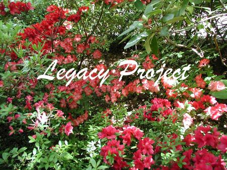 Legacy Project. Current Situation The Azalea Society of America in general and the Northern Virginia Chapter have a large number of hybridizers who have.