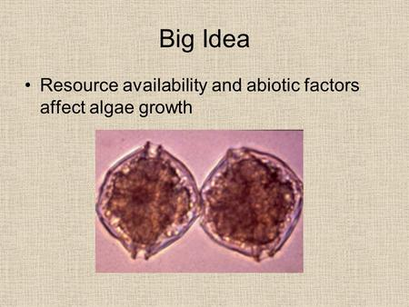 Big Idea Resource availability and abiotic factors affect algae growth.