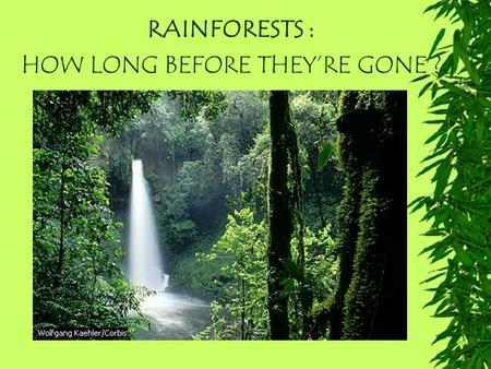 RAINFORESTS : HOW LONG BEFORE THEY'RE GONE ?. RAINFORESTS What are Rainforests? Where are they found? What animal life is found there ? Why are they important.