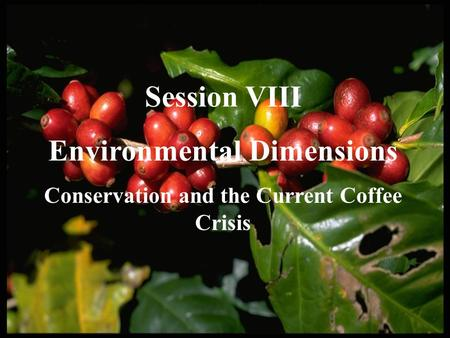 Session VIII Environmental Dimensions Conservation and the Current Coffee Crisis.