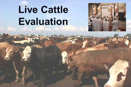 Live Cattle Evaluation. What are we trying to determine? u Quality grade u Yield grade u Dressing percentage.