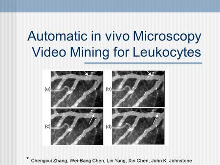 Automatic in vivo Microscopy Video Mining for Leukocytes * Chengcui Zhang, Wei-Bang Chen, Lin Yang, Xin Chen, John K. Johnstone.