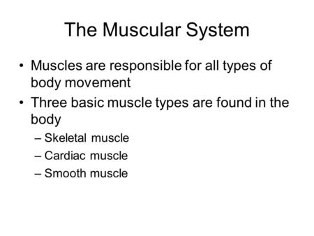 The Muscular System Muscles are responsible for all types of body movement Three basic muscle types are found in the body –Skeletal muscle –Cardiac muscle.