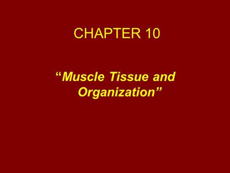 """Muscle Tissue and Organization"""