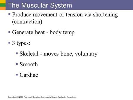 The Muscular System Produce movement or tension via shortening (contraction) Generate heat - body temp 3 types: Skeletal - moves bone, voluntary Smooth.