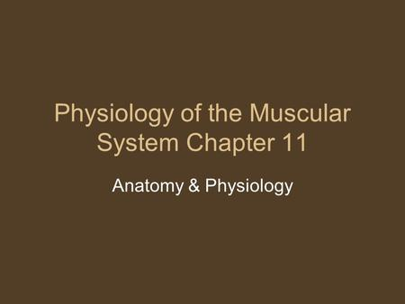 Physiology of the Muscular System Chapter 11 Anatomy & Physiology.